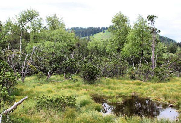 Bei diesem kühlen Wetter ist eine Wanderung durch das Hochmoor Fohramoos ein besonders ...