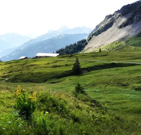 #au #öberle #bregenzerwald #vorarlberg #austria #nature #landscape #mountains #alpineflowers #alpinecabins #greatyellowgentian #naturelover #home #hiking #placetobe Au, Vorarlberg