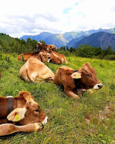 Meine heile Welt ⛰🐄🍃🐽💚💚💚 #meineheilewelt #seelenfrieden #glückseligkeit #feelings #mylife #lovethislife #berglandschaft #bergliebe #bergemachenglücklich ...