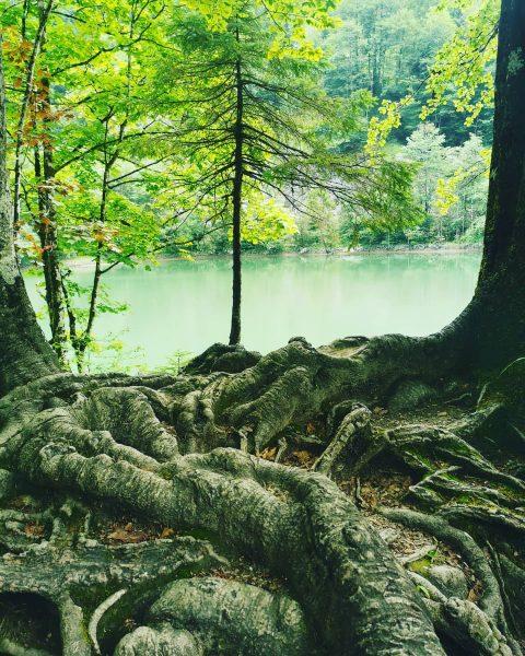 Like a mystic place. #venividivorarlberg #vorarlberg #rappenlochschlucht #staufensee #dornbirn