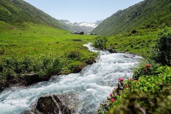 Ein rauschender Gebirgsbach, blühende Alpenrosen und satte Bergwiesen: Auf dem Weg zur Vergaldaalpe ...
