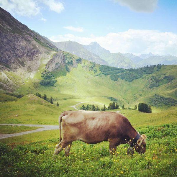 #kleinwalsertal #allgäu #riezlern #alpen #kuh #okbergbahnen #oberstdorf #nature #naturephotography #kleineauszeit #kanzelwand #adlerhorst