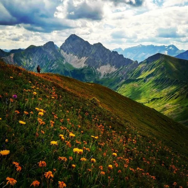 Blick zum Zitterklapfen mit herrlicher Alpenflora #Faschina #damüls #zafernhorn #alpenflora #alps #bregenzerwald #wandern ...