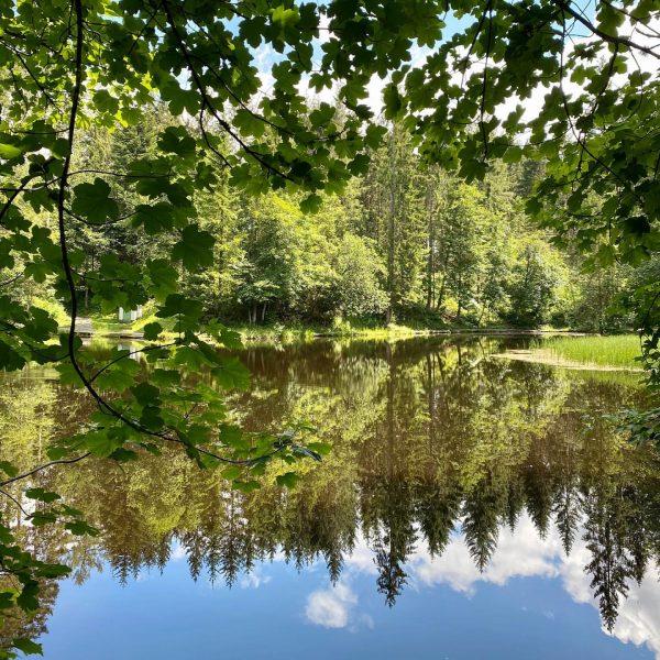 Let's reflect ... #boedele #bregenzerwald #vorarlberg #austria #lake #reflection #peaceful Moorsee am Bödele