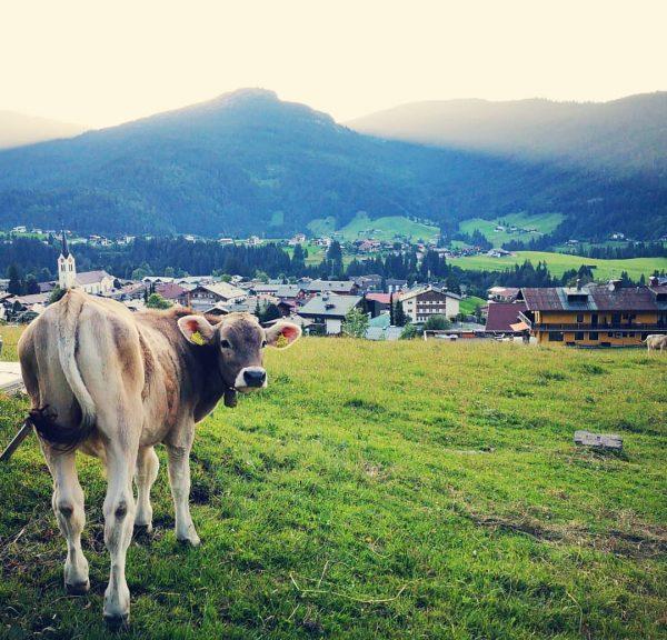 #kleinwalsertal #allgäu #riezlern #alpen #kuh #okbergbahnen #oberstdorf #nature #naturephotography #kleineauszeit