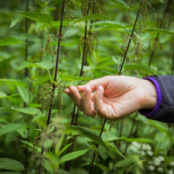 Brennnesselsamen 🌱 Jetzt kommt bald wieder die Zeit um die nussig schmeckenden Samen ...