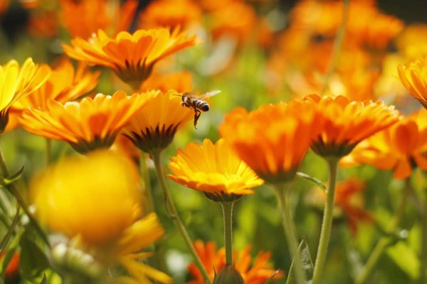 Schönen Start ins Wochenende🐝 Auch wenn manche Bienen fürchten, finde ich sie sehr ...