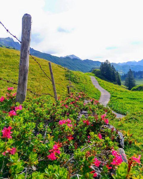 Mooie plekjes in Vorarlberg... wandelparadijs. #bregenzerwald #vorarlberg #visitvorarlberg #warth #warthschröcken #alpenrose Hochtannbergpass
