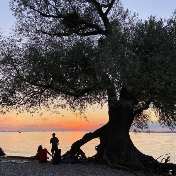 Picnic under the tree #summervibes #venividivorarlberg #visitvorarlberg #sunset