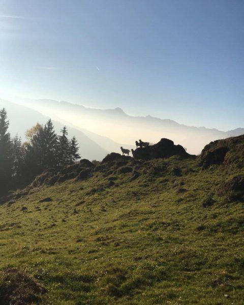 Hochhäderich ein toller Berg 👍🏼 #hochhäderich #nature #walk #earlybird #jausnen #bregenzerwald #vorarlberg #nice ...