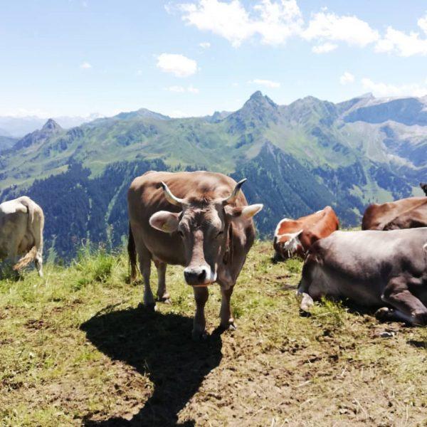 Montafon meine Heimat😊 #golm #mountain #montafon #meinmontafon #heimat #vorarlbergwandern #nature #outdoor #cow #lac ...