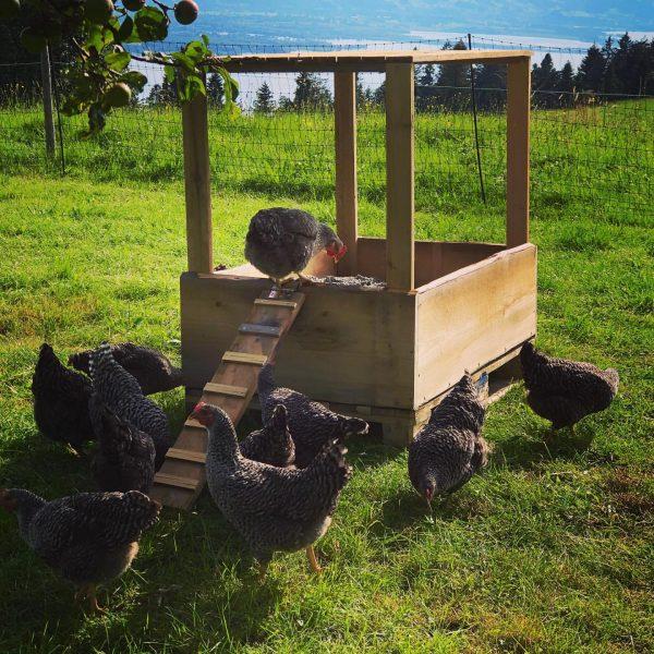 """Wir haben den Wellnessbereich unserer Hühner um eine überdachte """"Buddelkiste"""" erweitert. Hier haben Sie eine weitere Möglichkeit..."""
