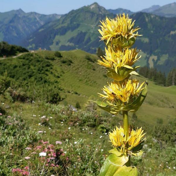 Alpenbeauty.... . . . . #wandernmachtglücklich #wandern #kleinwalsertal Kleinwalsertal Österreich
