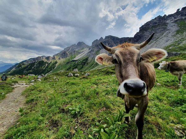 Aktivurlaub 💚💚💚 Wandertraumtour Kanzelwand Fiderepasshütte Fiderescharte Zurück übers Wildental #kleinwalsertal #oberstdorf #österreich #wandern ...