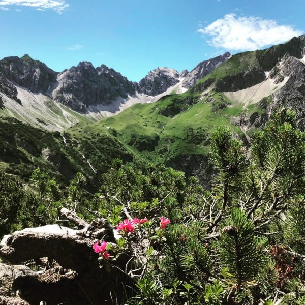 Sommer in den Bergen 😍 #berge #bergrose #allgäu #oberallgäu #walsertal #kleinwalsertal #mountains #wanderlust ...