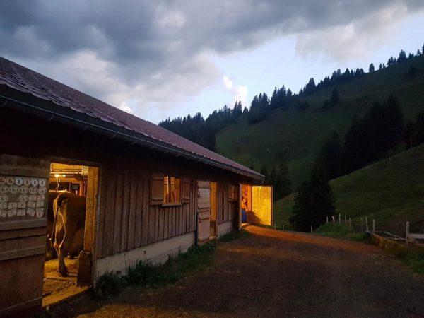 """""""Von den Alpen ⛰ unserer Heumilchbauern"""" . 👉 Morgenstund hat Gold im Mund ..."""