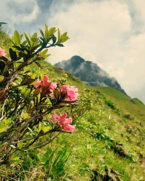 Everything is better in the mountains. . #austria_memories . Wenn du den steilen ...