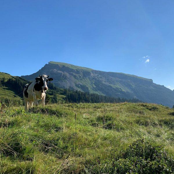 Der frühe Bergsteiger ... 🤔 besteigt den Hohen Ifen 😅 #hoherifen #kleinwalsertal #mountaingirls ...