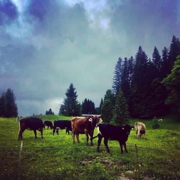 #Gschtrüübelhof #heyladies #tierliebe #artgerechtehaltung #Kleinwalsertal Hirschegg, Vorarlberg, Austria