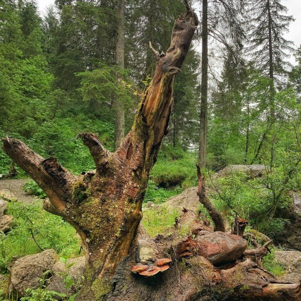 Am Gemstelbach #kleinwalsertal #mittelberg #erholungpur #wanderurlaub #wurzel #gemsteltal Gemsteltal
