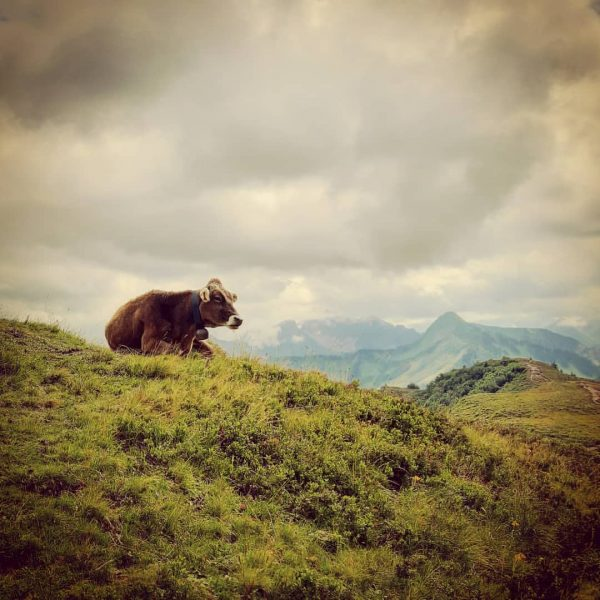 #damüls #damülsmellau #beautifulplaces #placestovisit #wanderlust #travelphotography #traveltheworld #widenyourworld #lovetotravel #views #traveldiary #hiking #hikingadventures ...