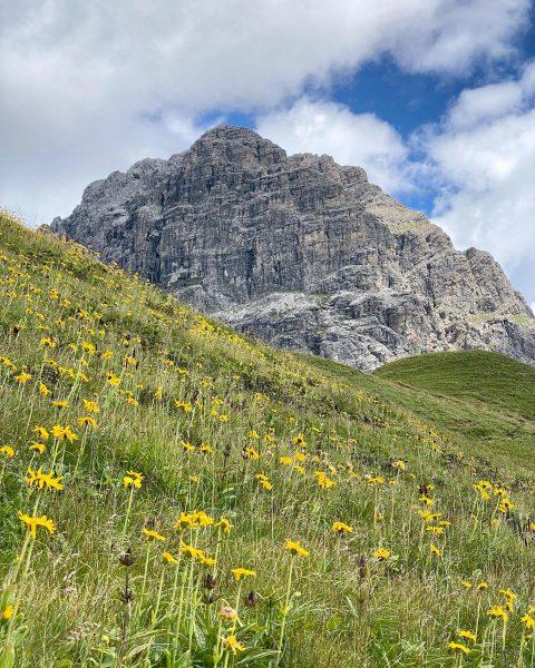 Wunderschön...😍 #Kleinwalsertal #Widderstein #Blumen #Alpenblumen #SommerindenBergen #Sommerurlaub #Wanderurlaub #Aktivurlaub #wandern #Naturfotografie #naturelovers #feelaustria ...