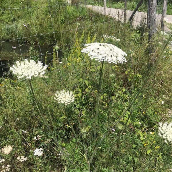 Welch Blumenpracht die Natur im Bregenzerwald grad liefert- schöner als in jedem Laden 🌼🌺🌷🌸💐🌻🌹🍀 #sibratsgfäll #kraehenberg #amrandederwildnis...