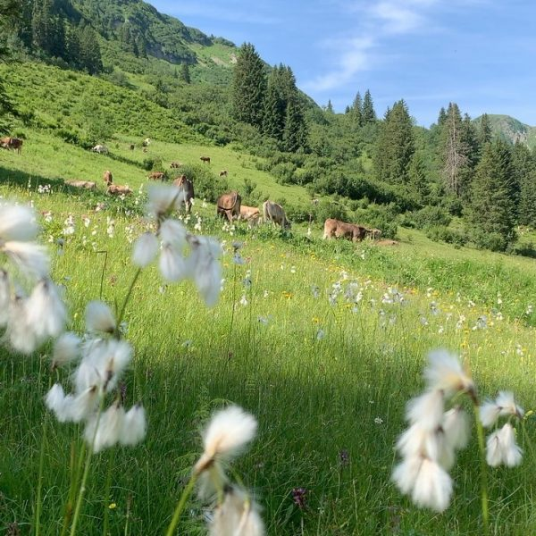Wunderbare Sommertage im schönsten Tal der Welt😍 #kleinwalsertal 🇦🇹 #hausbrenner #alpinlifestyle #urlaubindenbergen #hirschegg ...