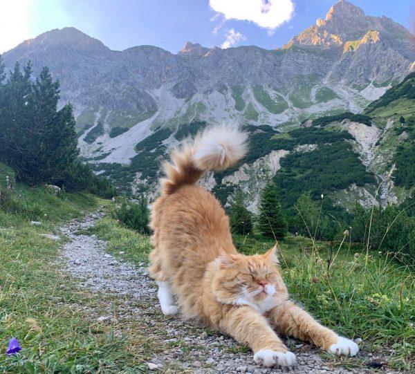 #dailyyoga unterhalb der Zimba😸. Der Kater von der #heinrichhueterhütte weiß wie man ein gutes Katzenleben führt. #alpenvereinvorarlberg...