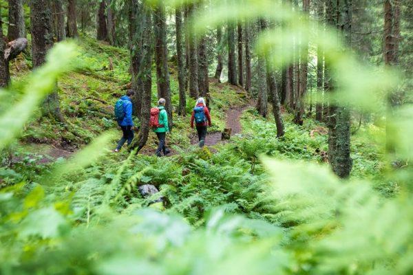Hast Du schon mal das Waldbaden ausprobiert? 🌳🌿🌞 Die magische Atmosphäre, die starke ...