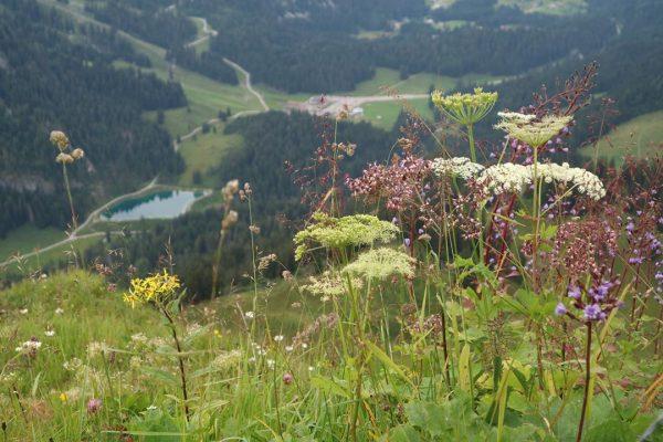 Herzsee . #oostenrijk #vorarlberg #allgäu #kleinwalsertal #kwt #kwtlodge #mittelberg #baad #riezlern #hirschegg #walmendingerhorn ...