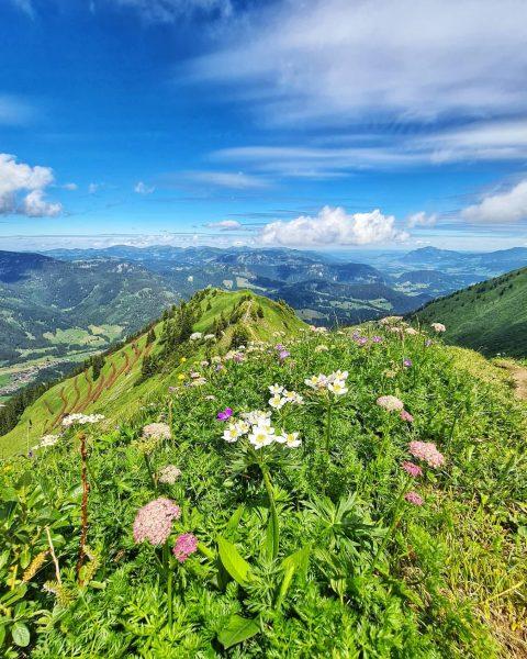 𝔻𝕚𝕖 𝕂𝕒𝕟𝕫𝕖𝕝𝕨𝕒𝕟𝕕 Die Kanzelwand ist ein 2058 m hoher Berg in den Allgäuer Alpen, über den die...