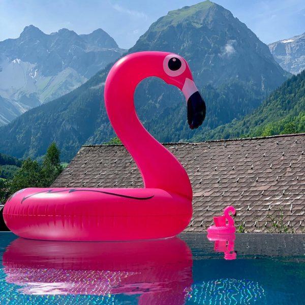 Frau Mingo - unsere Brandner Flamingodame- sie freut sich, uns und unsere Gäste ...