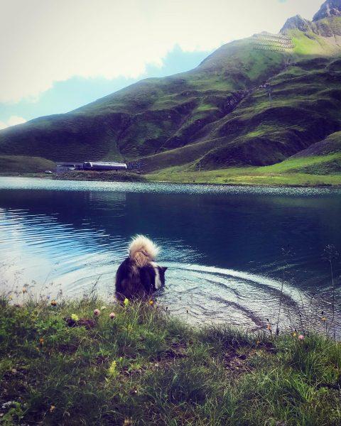 . #vorarlberg #zürs #zürsersee #arlberg #wanderdog #aufiundowi #hikingwithdogs #superdog #lake #laketime #lakedog #hikingadventures ...