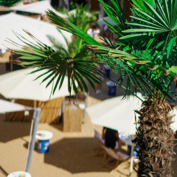 All you need is palm trees and sand. 🌴 Enjoy the beach und kühl dich mit einem...