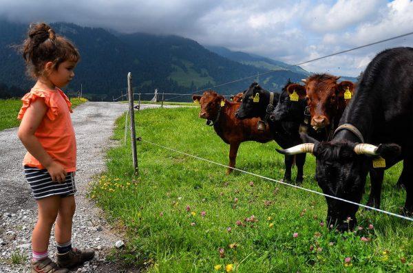 Small 🐮 #bregenzerwald #georunderindberg #venividivorarlberg Sibratsgfäll, Vorarlberg, Austria