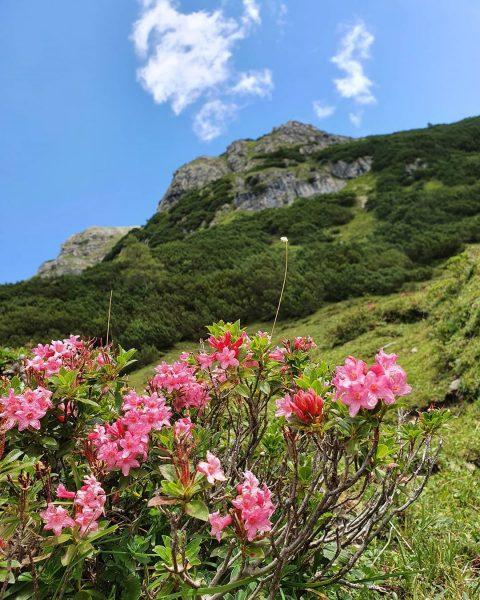 #wandelen #wandeling #rondjelopen #rondjewandelen #hike #hiking #wandern #wanderlust #oostenrijk #vorarlberg #allgäu #kleinwalsertal #kwt ...