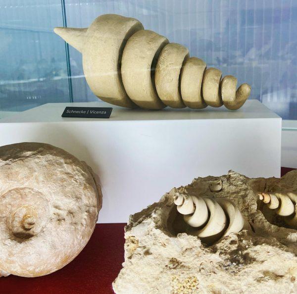 Wenn die Natur Kunst schafft- Neben den vielen Tieren im Naturmuseum gibt es ...