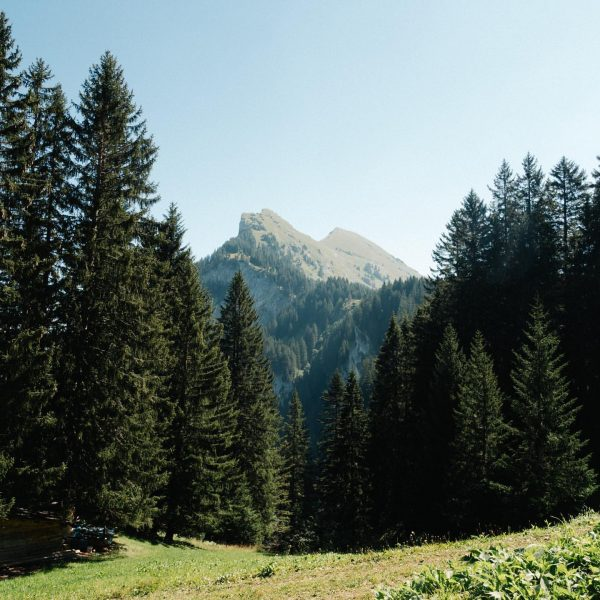 Kanisfluh Wanderung = K.O. . . . #wanderlust #kanisfluh #ontheroad #mountains #mountainlove #mointainsarecalling ...