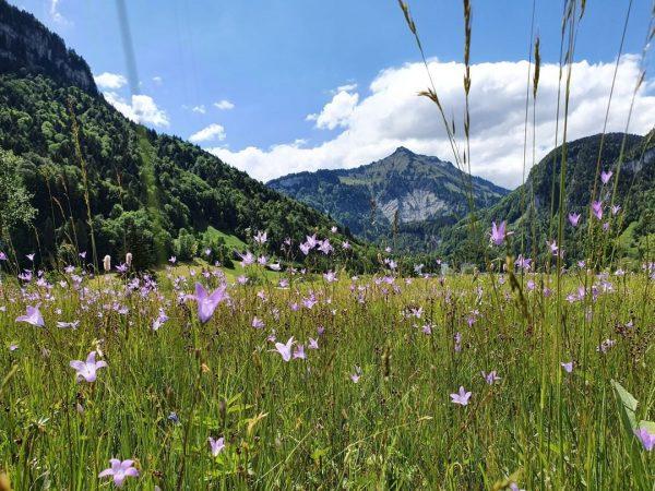 Verbinden Sie Ihren Wellness-Urlaub mit einer schönen Wanderung durch die atemberaubende Natur im Bregenzerwald. 🌲🌱🌴☀️🐄⠀ ⠀ Teilt...