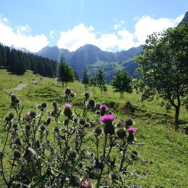 Tag 10, Mittwoch, Wanderung ins #Wildental, Start Alpenrose, Ende Bödmen, über Gasthof Alpenblick, ...