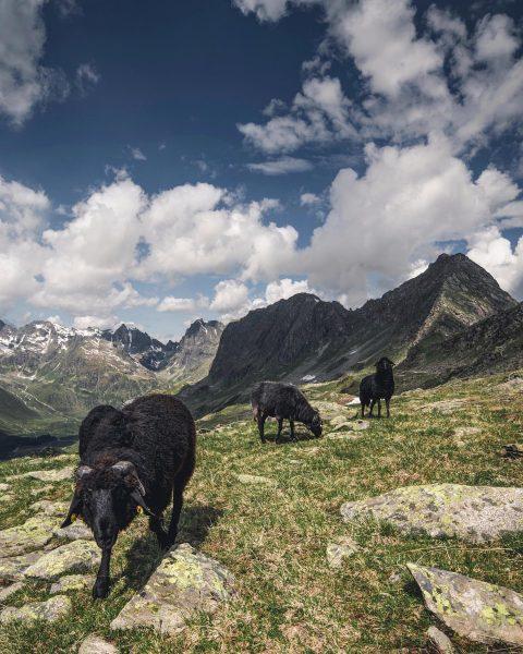 Bielerhöhe , great place in the alps 👍 • • • • @earth_deluxe ...