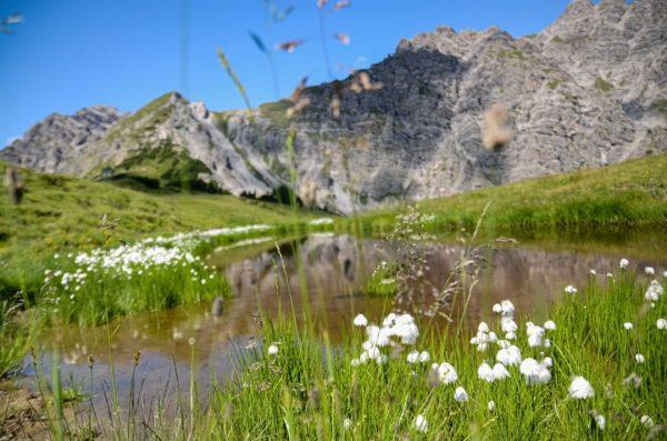 Du möchtest immer top informiert über unsere geöffneten Anlagen, Attraktionen, Alpen und Hütten sein? Dann schau in...