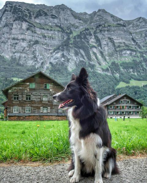 Met Koda in #Schnepfau met de steile wand van de #Kanisfluh . . ...