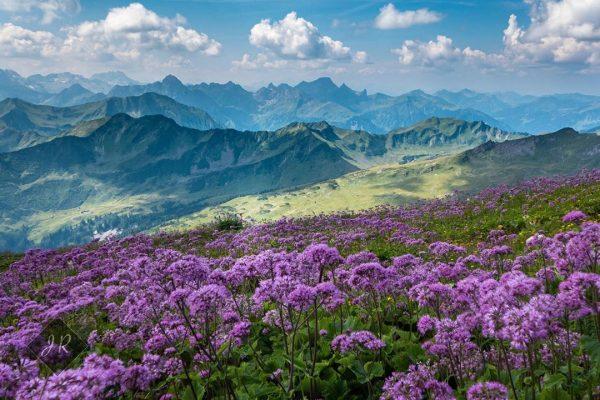 Blütenzauber am Gipfel des hohen Ifen 🏔...ich liebe diesen Blick ins Tal 💜 ...