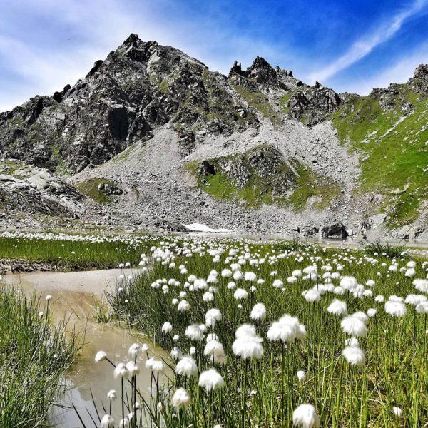 Wollabluama💞 ein Teppich voller weißer Wattebäusche✨ #rauszeit #rauszeitmontafon #achtsamkeit #meinmontafon #achtsamwandern #meditation #offline ...