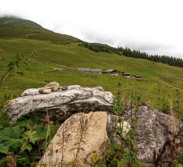 Latschätz . . . . #alps #alpen #alpe #folkgreen #hikingadventures #discoveraustria #igeraustria #outdoortones ...