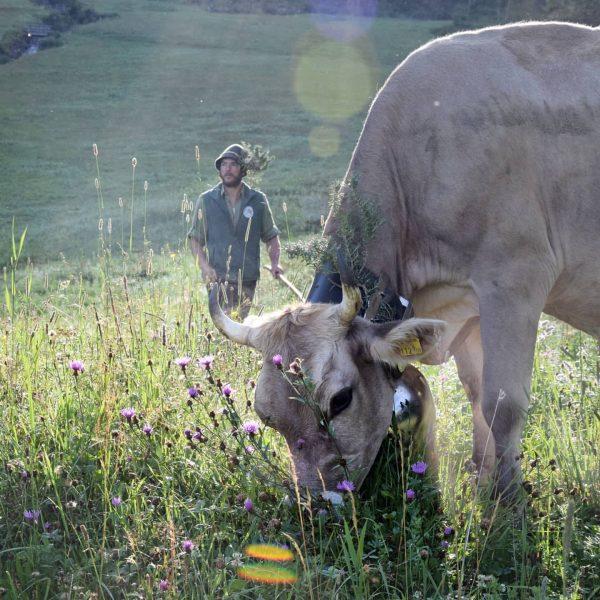 Ein schöner Alpsommer geht zu Ende... Einige Älpler und Älplerinnen zogen heute mit ihrem Vieh ins Tal...🐮⛰️😊...