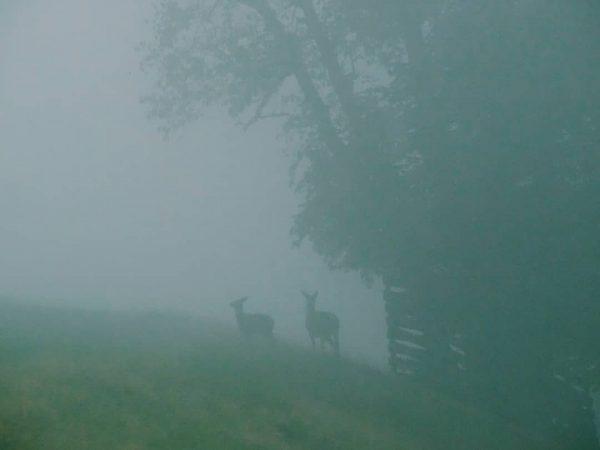 Two guys hiding in the fog 🦌 Wie habt ihr dieses regneriche Wochenende ...