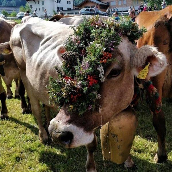 SPÄTSOMMER in den Bergen! 😀 ... wenn die ersten Kühe wieder im Tal sind ... wenn der...